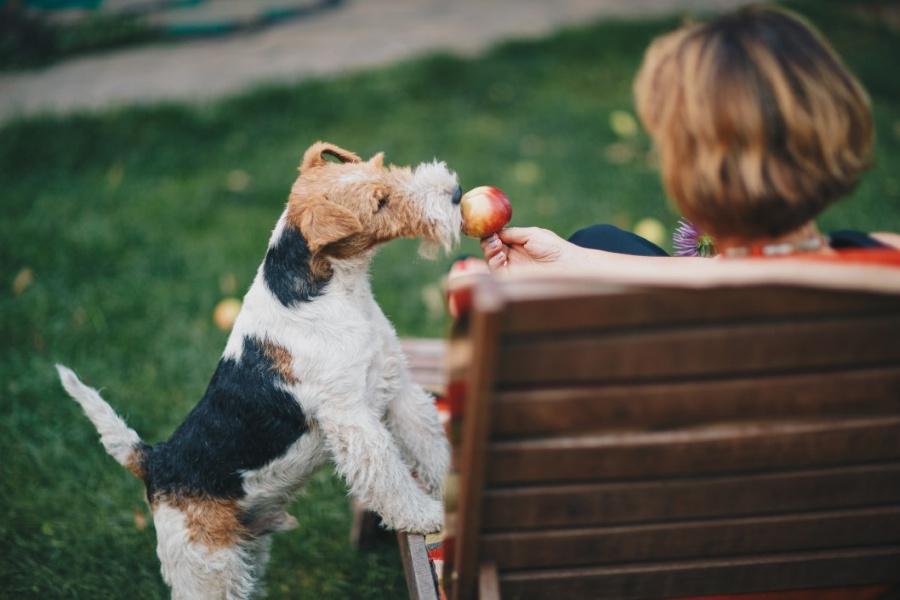 dürfen hunde äpfel essen?