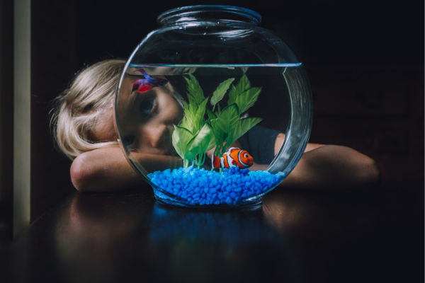 fisch als haustier für kinder