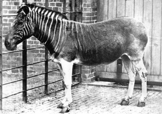 ausgestorbene Pferde Arten