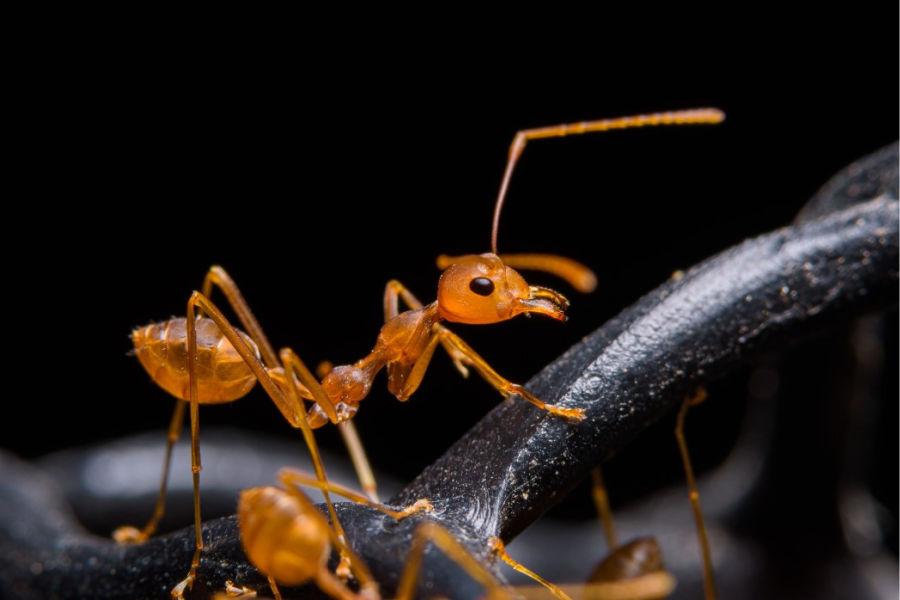 die 10 gefährlichsten insekten der welt