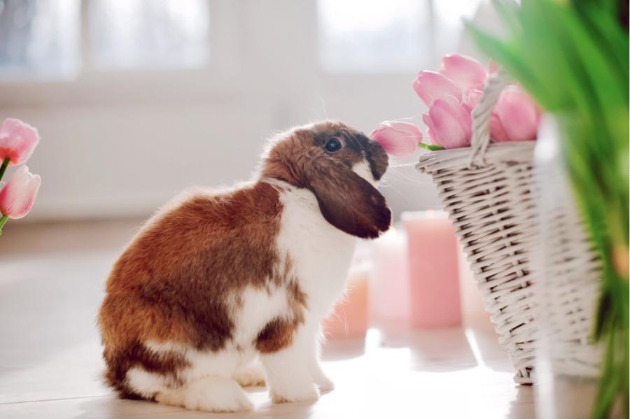dürfen kaninchen und hasen bananen essen?