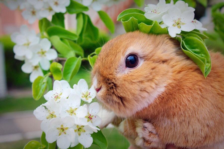 dürfen kaninchen kirschen essen?