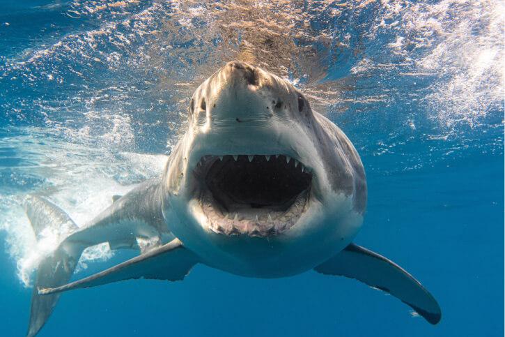 die 10 gefährlichsten haie der welt