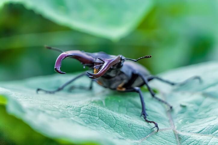 die 10 größten insekten der welt