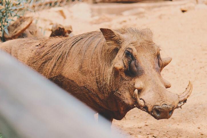 die Hässlichsten Tiere der Welt