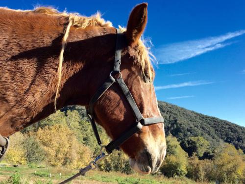 größten pferderassen der welt