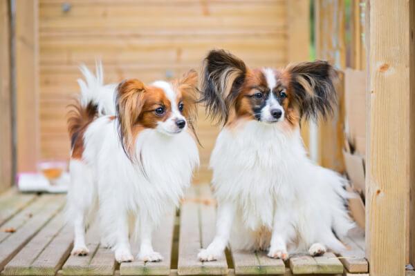 schlaue hunde