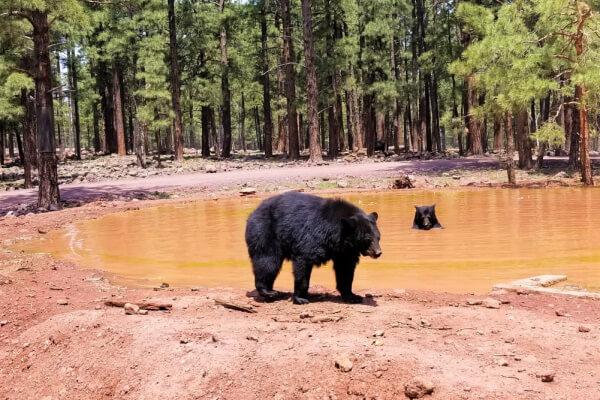 Bärenarten