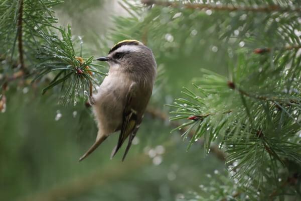 süßester Vogel
