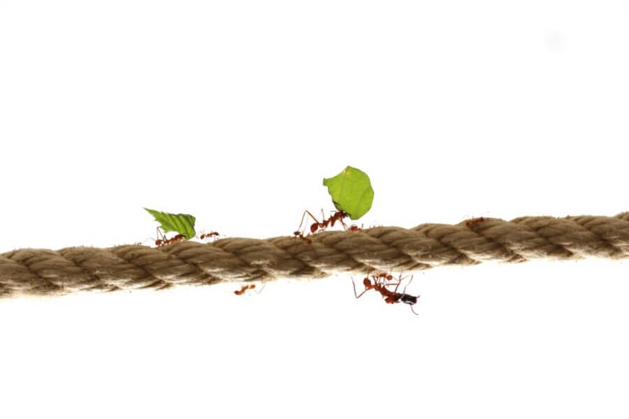 wie stark sind Ameisen?