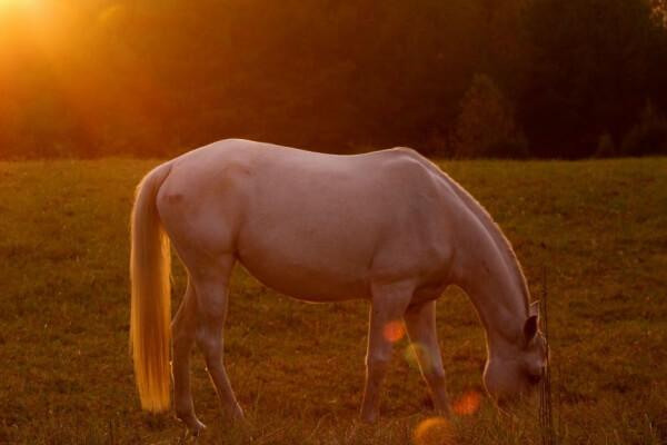 schöne Pferderassen