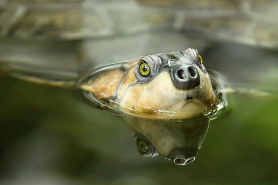 Schildkrötenarten