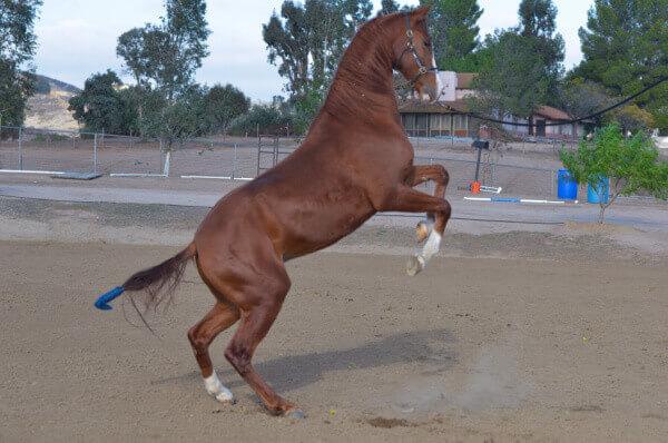 die schönsten Pferderassen der Welt